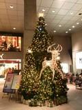 原宿クエストのクリスマスイルミネーション2009