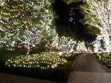 サザンテラスのクリスマスイルミネーション4