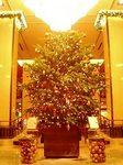 帝国ホテルのクリスマスイルミネーション2005