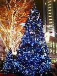 渋谷ハチ公前広場のクリスマスツリー