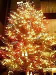 銀座ミキモトのジャンボクリスマスツリー2008