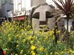 渋谷のモアイ像と菜の花